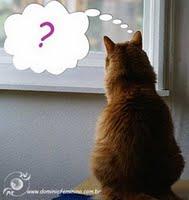 gato+duvida_bmp